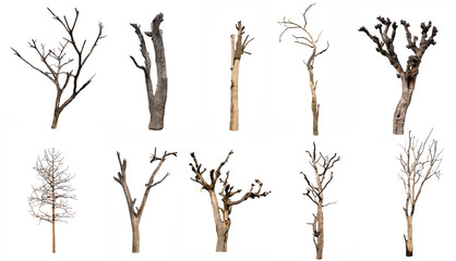 isolated Dead tree Collection on White Backdrop Fototapete