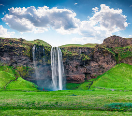 Photo sur Aluminium Vert Bright morning view of Seljalandfoss Waterfall on Seljalandsa river in summer. Colorful summer scene of Iceland, Europe. Beauty of nature concept background.