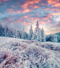 Picturesque winter sunrise in Carpathian mountains with snow covered trees and grass. Colorful...