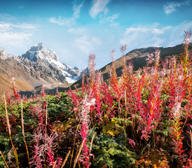 Wall Mural - Colorful autumn morning in the Caucasus mountains
