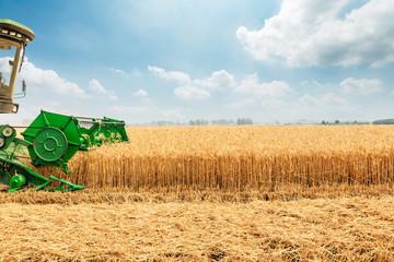 Combine harvester harvesting wheat on sunny summer day Fototapete