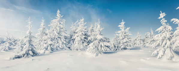 Fabulous winter panorama of mountain forest with snow covered fir trees. Colorful outdoor scene,...