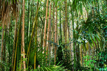 Bamboo field wallpaper. Bamboo forest framed by green leaves. Background of bamboo trees. Bamboo texture.
