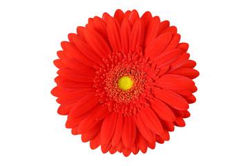Papiers peints Gerbera gerbera flower