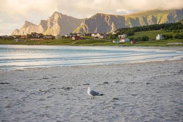 Möwe am Strand von Ramberg, Lofoten
