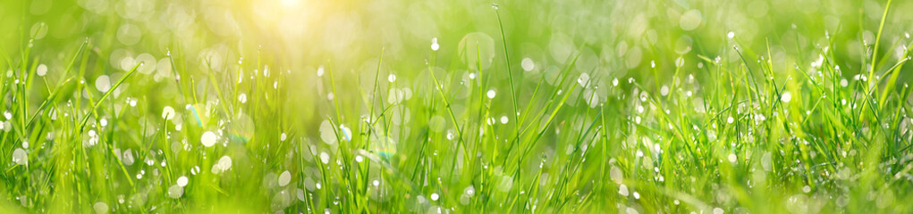 Green grass abstract blurred background. beautiful juicy young grass  in sunlight rays. green leaf macro. Bright fresh Summer or spring nature background. Panoramic banner. copy space Fototapete