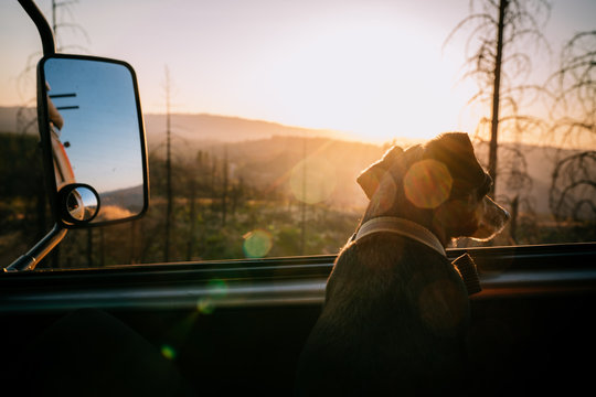 Dog looking at a sunset in an rv