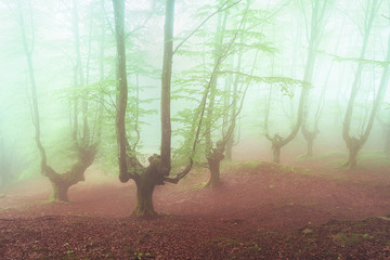 fantasy bright forest with fog