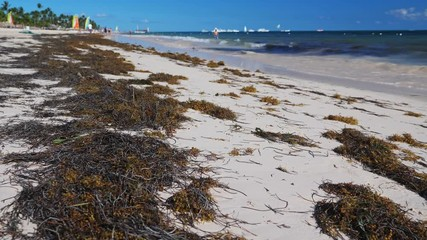 Search photos sargassum