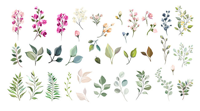 Set of floral elements. Flower and green leaves. Wedding concept - flowers. Floral poster, invite. Vector arrangements for greeting card or invitation design