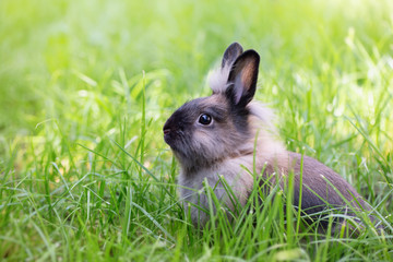 Brown rabbit on a green meadow. Cute furry animal on the grass. Bright sunshine