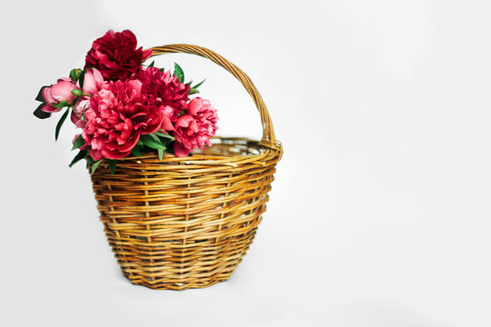 Bouquet of living coral and pink  peonies in a  basket of wicker on a white background