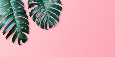 Tropical leaves monstera and philodendron on pink color background minimal summer