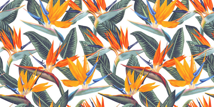,Seamless pattern with tropical flowers and leaves of Strelitzia, called crane flower or bird of paradise. Realistic style, hand drawn, vector. Background for prints, fabric, wallpapers, wrapping pape