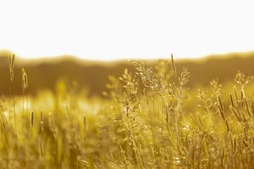 Pflanzen im Sonnenuntergang_3 Fotoväggar