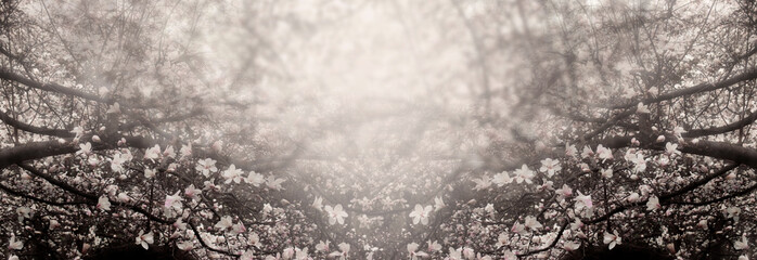 Wall Mural - Mysterious spring floral background with blooming magnolia flowers