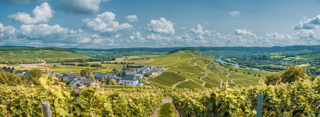 wineyards in mosel valley
