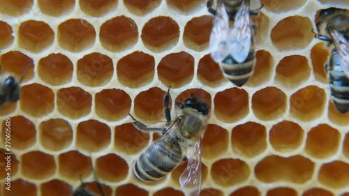 Wall mural Bees produce honey in the hive. View of the hive from the inside.