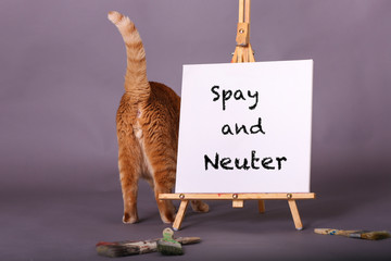 Spay and neuter white canvas sign with orange tabby cat standing