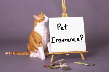 White and orange kitty cat standing by Pet Insurance? sign