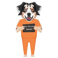 Polizeifoto Gefängniskleidung Australian Shepherd