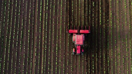 Wall Mural - Tractor cultivating field at spring, aerial sunset view