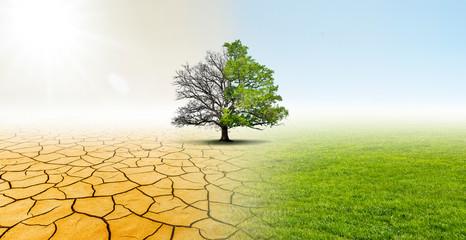 Baum in einer Landschaft mit Wüste und Wiese zeigt Verbesserung des Klimas