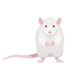 Cartoon white rat vector illustration. Cute sitting albino rat isolated on white background.