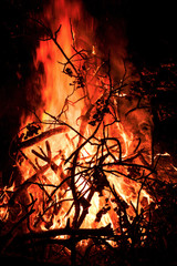 Silhouette of branches against the background of a fire flame