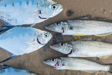 fish on sand