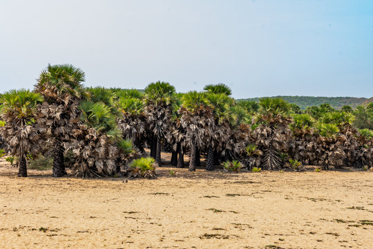 black trunk of palm trees near sea beach looking awesome in summer day.