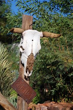 longhorn skull fixed on wooden post