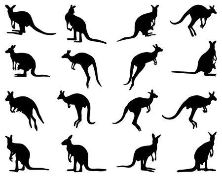 Black silhouettes of kangaroo on a white background