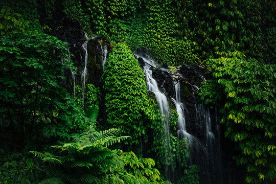 little waterfall in tropical green rainforest