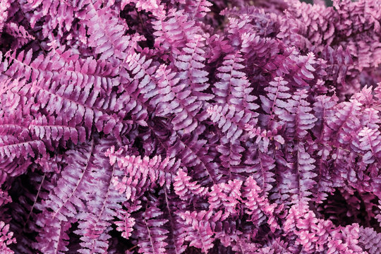 Infrared: Abstract fern plant leaves