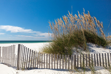 Wall Mural - White sand beach with sea oats and dune fence at mid day