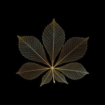 Leaf chestnut, isolated. Vector illustration. EPS 10