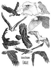 Hand Drawn Eagle Vector design collection