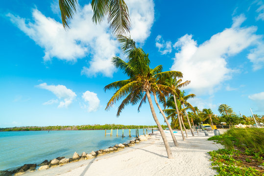 Palm trees and white sand in Florida Keys