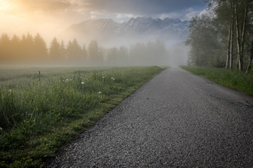 road in the flower field, at an foggy morning