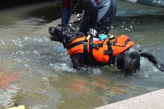 Sant'Antioco, Sardinia - Lifeguard dog