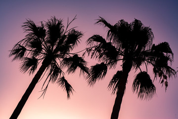 Vibrant Tropical Summer Background With Palm Trees at Sunset