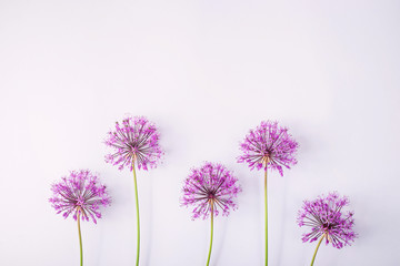 Spring flowers on a gray background - creative picture with space for text