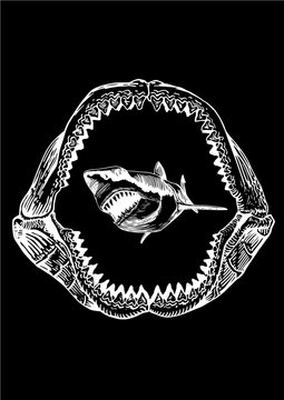 Graphical shark in megalodon jaw isolated on black backgrond, vector sea-food illustration