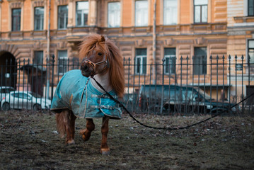Horse resting on the street of St. Petersburg