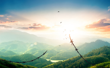 World Refugee Day concept: Free bird flying over broken barbed wire Wall mural