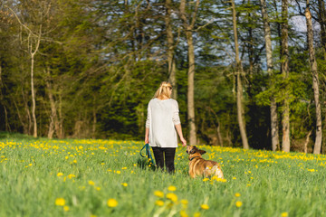Hundetraining mit Anne Fotoväggar