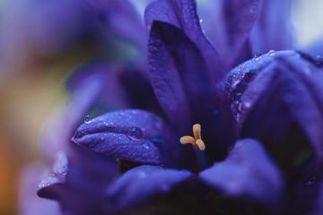 Obraz fiolet  - fototapety do salonu