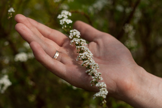 Beautiful little flowers. Natural background.