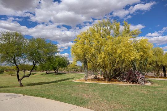 Sonoran Hills Park